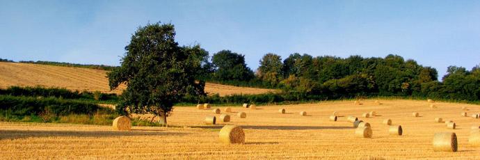 agricoltura690 Agricoltura
